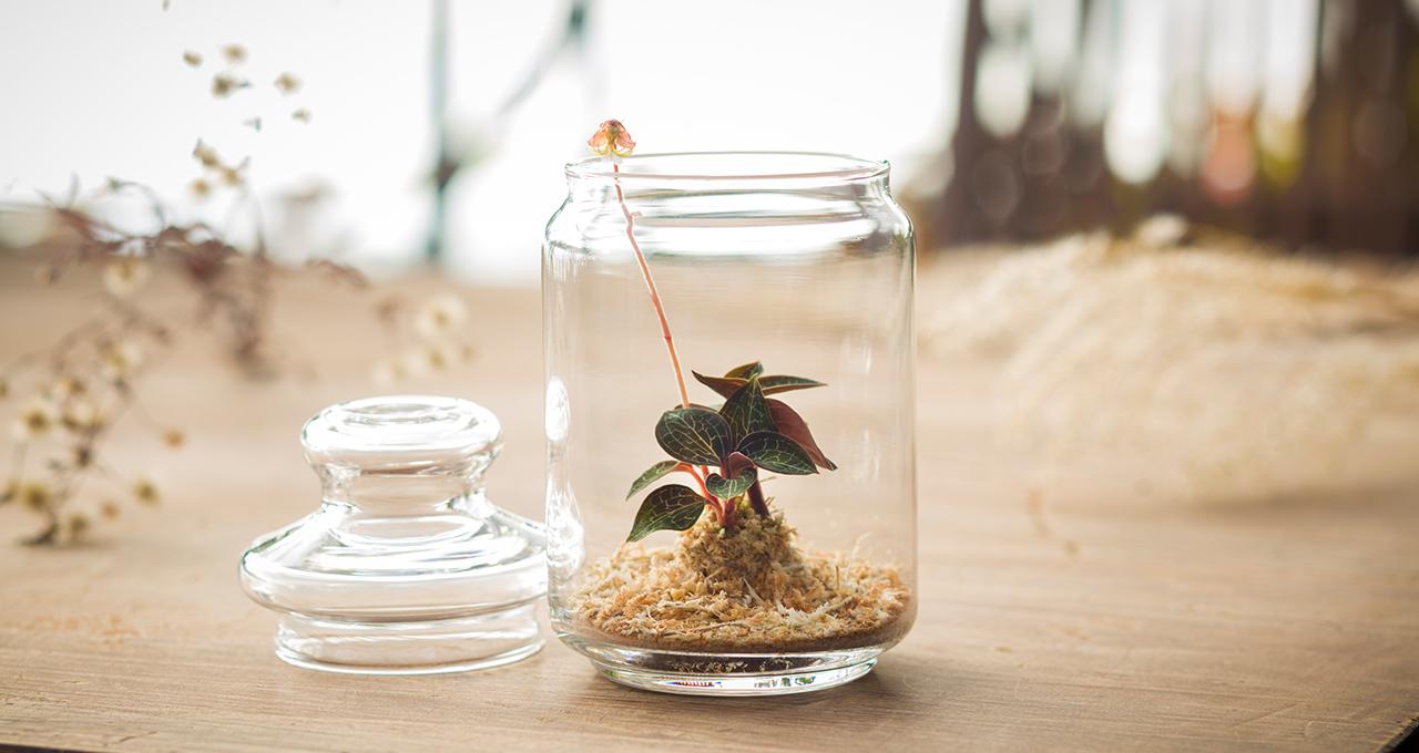 すたを開くと爽やかな軽井沢の香りが届きます。